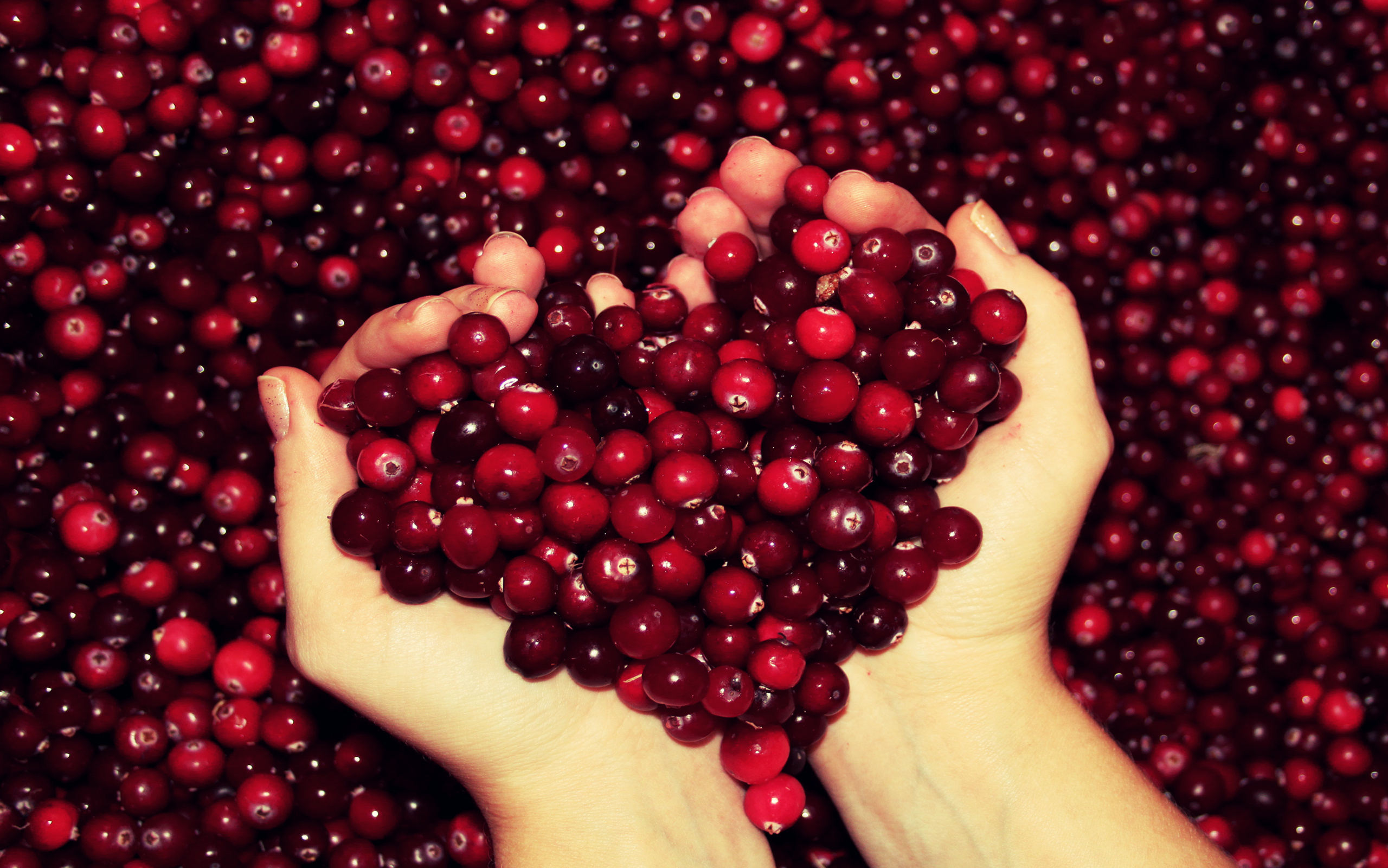 autumn-free-wallpaper-autumn-s-cranberry-heart_2560x1600_93128-1